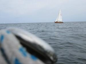 vaade Gretalt kusagil Paljassaare kandis (foto: Ingrid Köösel)